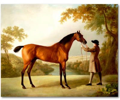Tristram Shandy Bay race horse , painting by George Stubbs c1760