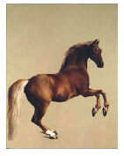 horse art. painting of Whistlejacket by George Stubbs c1762