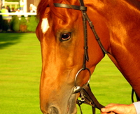horse close up, photograph by Tom Conway